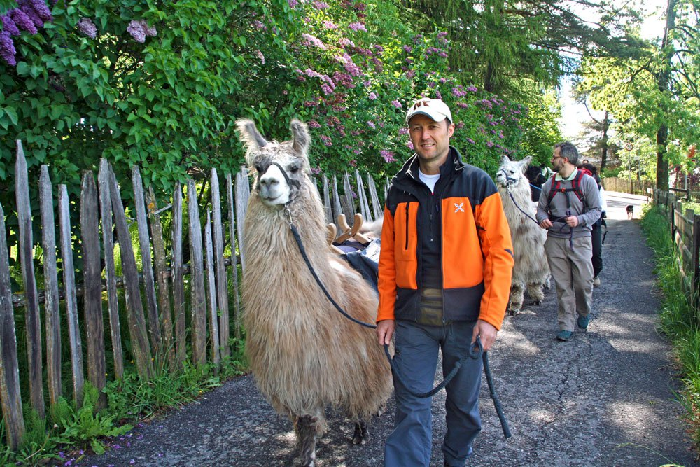 Llama Trekking South Tyrol in Valdaora – Harmony between animals, humans and nature
